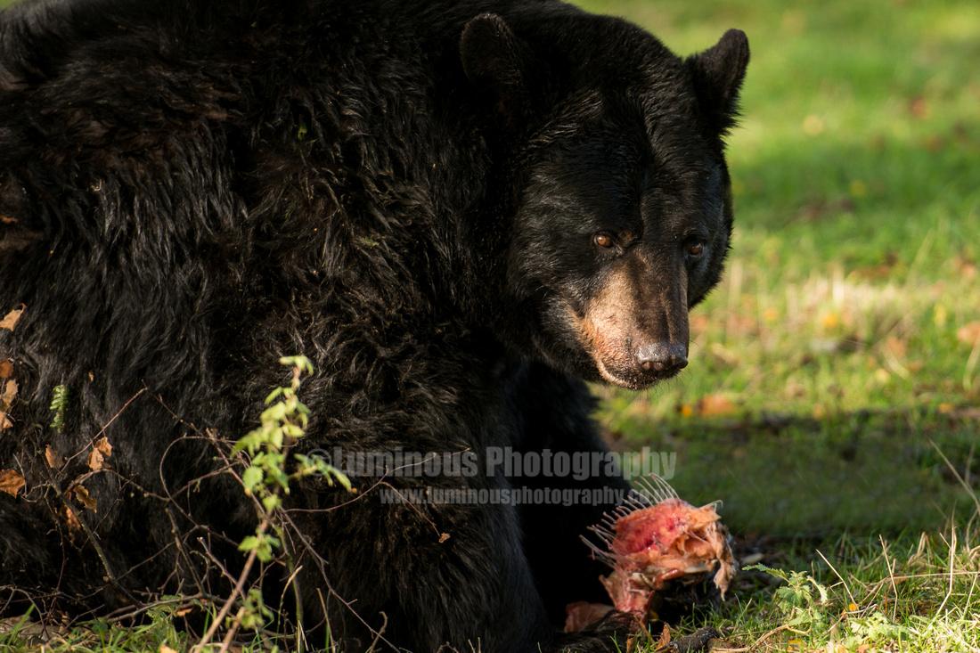 Photographer in Berkshire Luminous Photography safari Wildlife 2