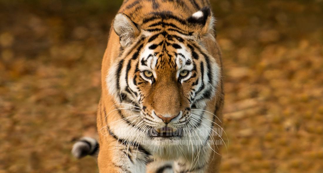 Photographer in Berkshire Luminous Photography safari Wildlife 3
